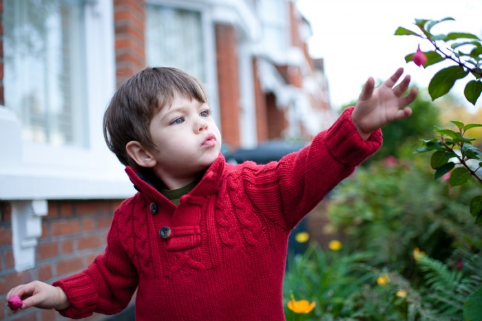 Little boy in red jumper looking at flowers