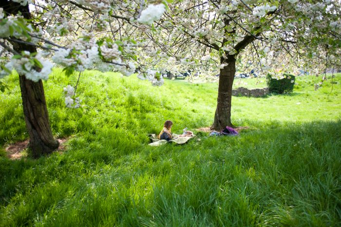 Spring picnic under trees filled with blossom
