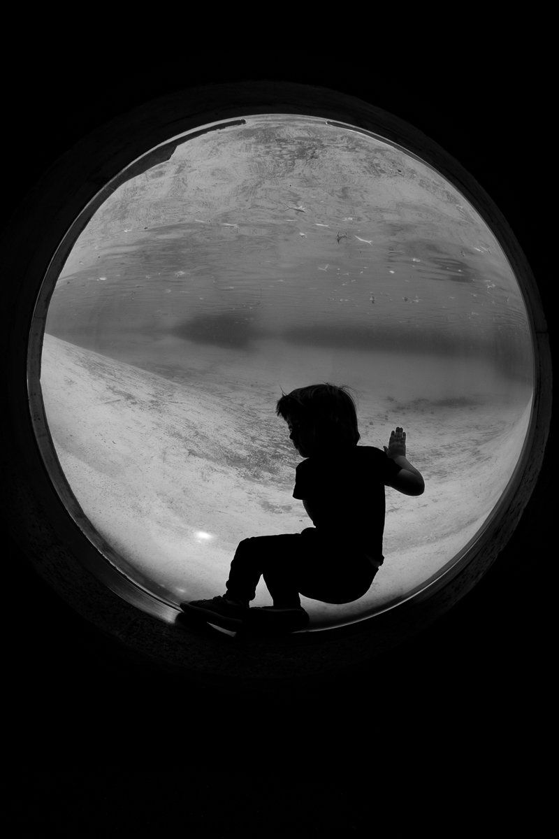 Silhouette of boy watching the penguins at London Zoo