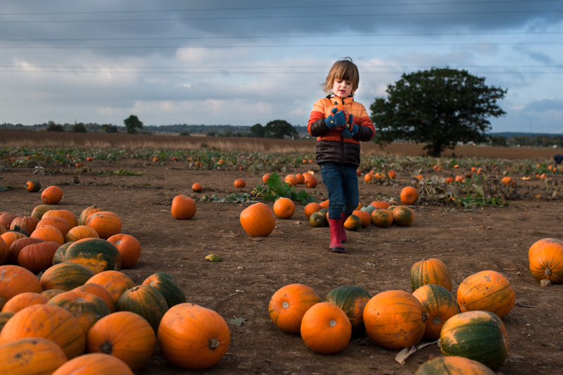 Boy visiting pumpkin field near London