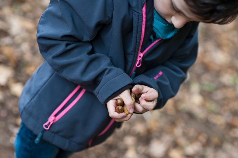 Boy collects acorns in Coppetts Wood